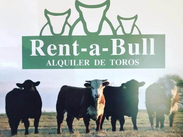 imagen rent a bull 586x440 Pagina de Inicio